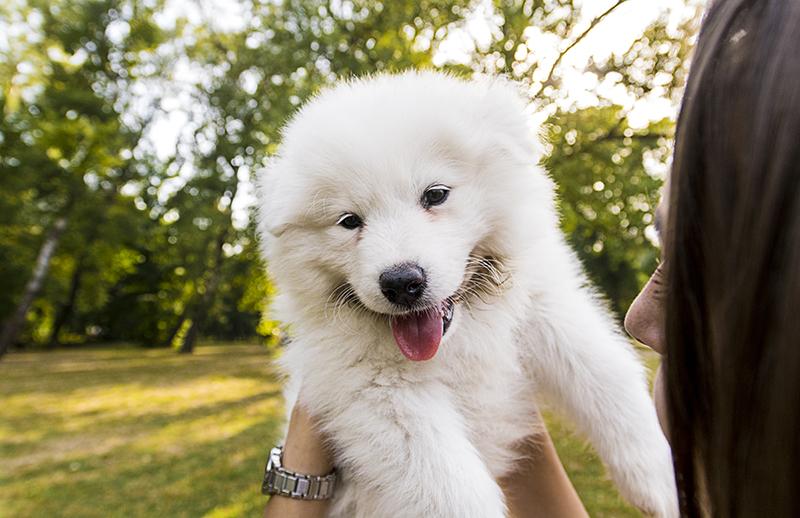 Schattige puppie kopen