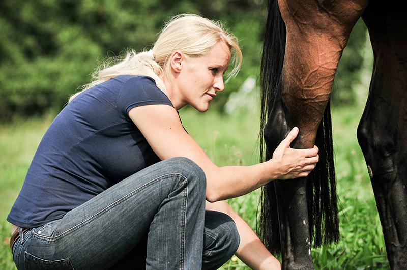 shiatsu voor paarden