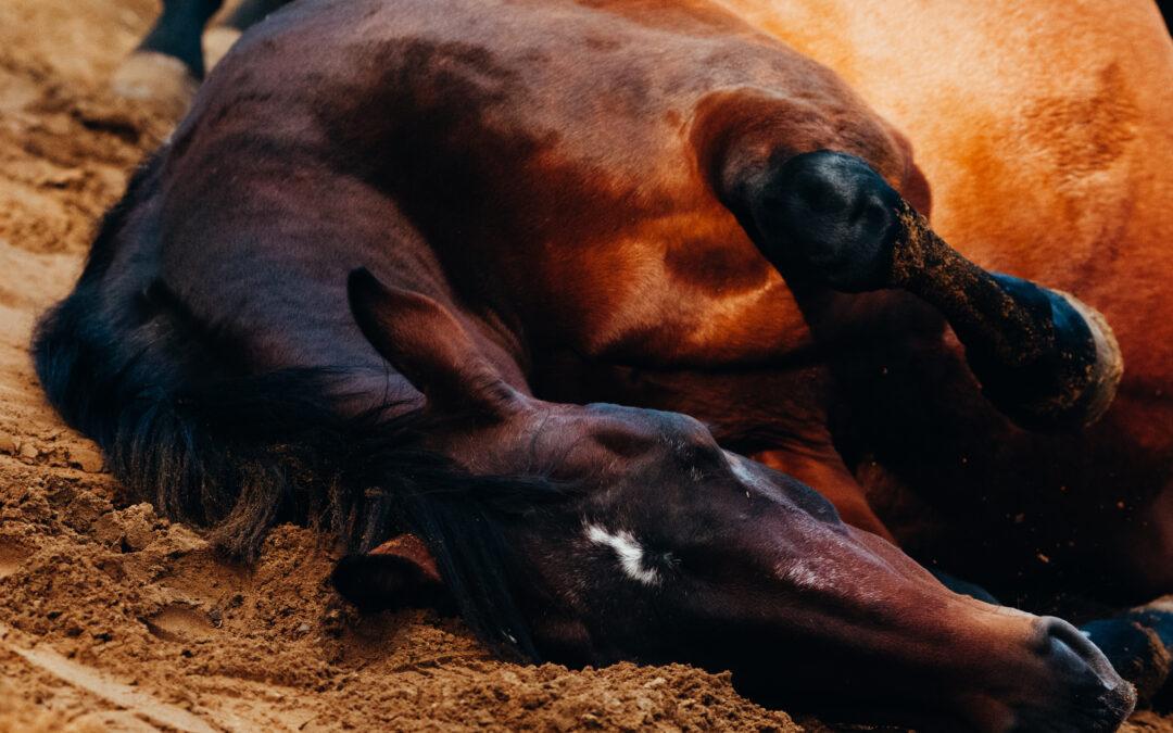 Koliek bij paarden