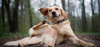 Vachtproblemen bij honden