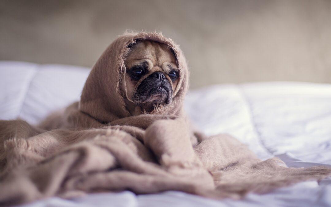 Hoofdpijn bij honden