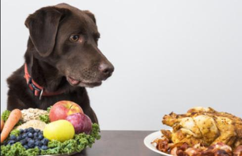 Spijsverteringsproblemen bij honden