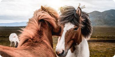 De ziekte van Cushing bij jouw paard