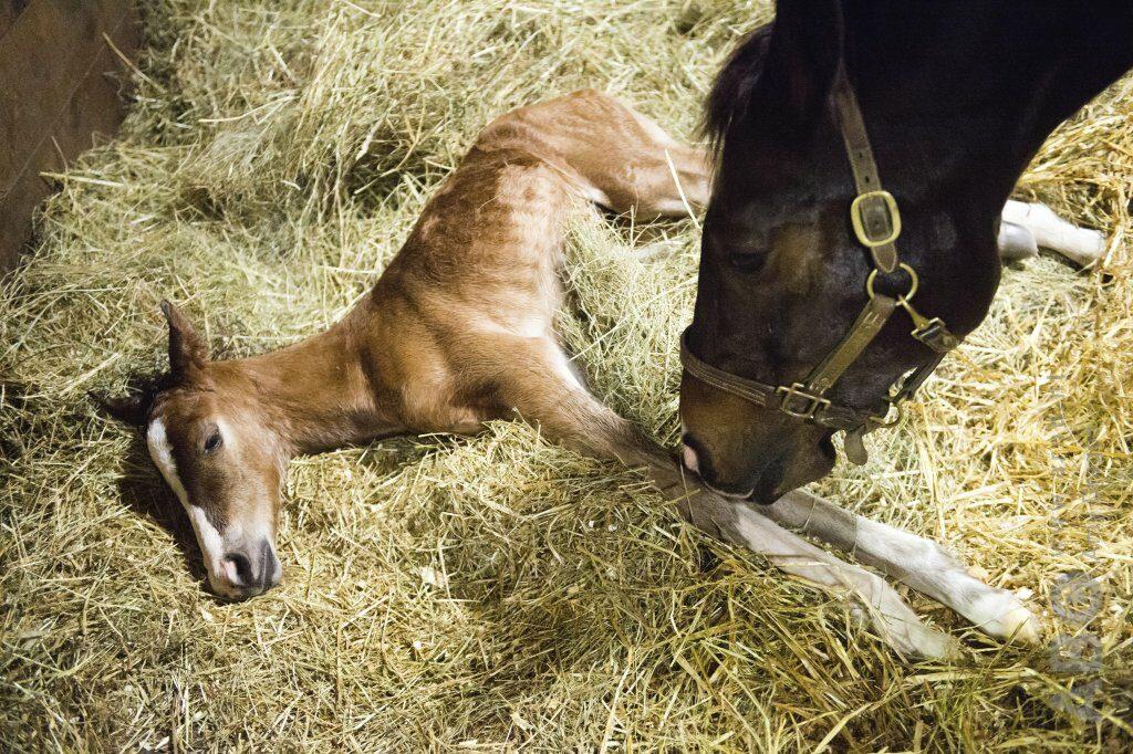 Abortusvorm rhinopneumonie bij paarden