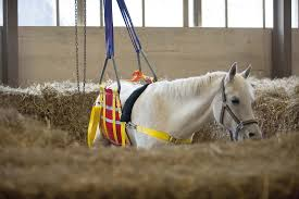 Verlammingsvorm rhinopneumonie bij paarden