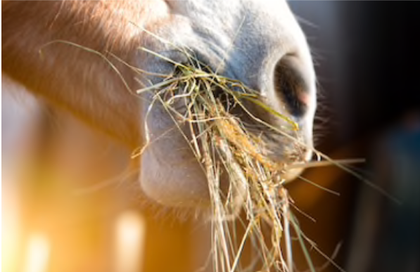 voeding paard